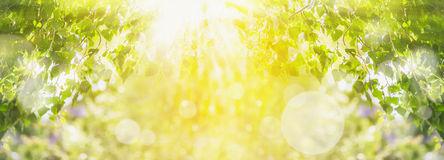 le-fond-d-été-de-ressort-avec-l-arbre-vert-la-lumière-du-soleil-et-le-soleil-rayonne-48190414