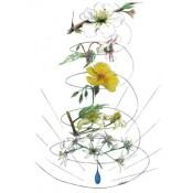 poster-les-5-fleurs-de-la-solution-d-urgence-du-dr-bach-par-anne-marie-pujol
